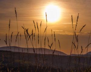 LNHC_Accepted, Landscape