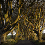 dark_hedges