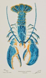 Northern Lobster (Blue)